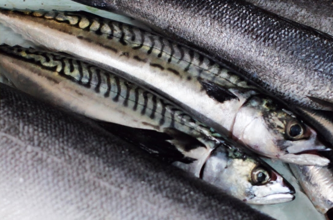 How to Fillet Sardines
