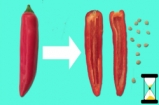 How To De-seed a Chilli | Jamie's 1 Minute Tips