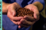 Coffee: From Bean to Brew | Mike Cooper
