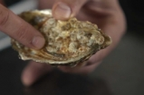 How To - shuck oysters