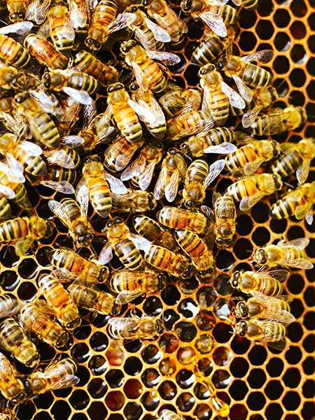 Food Fight: The importance of bees image