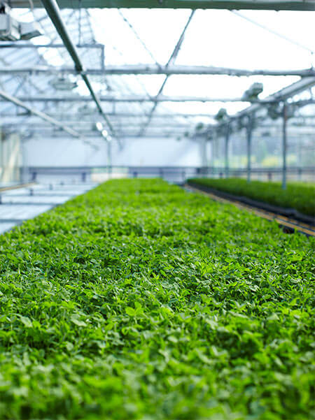 What are the benefits of aquaponic farming? image