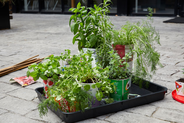 plant pots in garden with green plants in