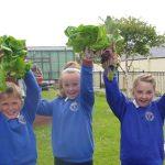 kids growing turnips in a school garden