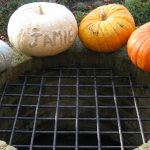 pumpkins lined up with names on them