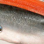 raw salmon fish