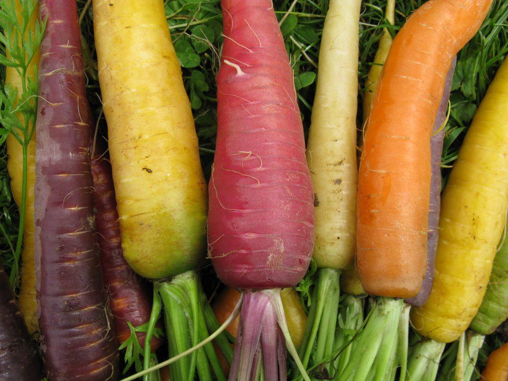 carrot closeup