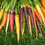an assortment of carrots in different colours
