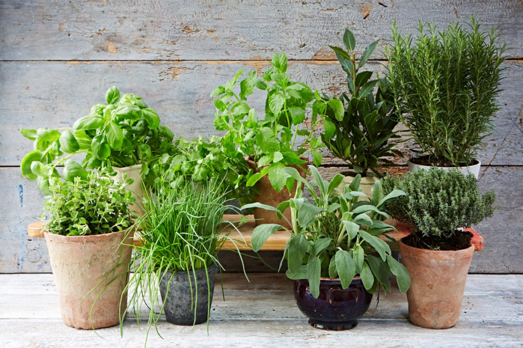 the ultimate guide to growing herbs jamie oliver. Black Bedroom Furniture Sets. Home Design Ideas