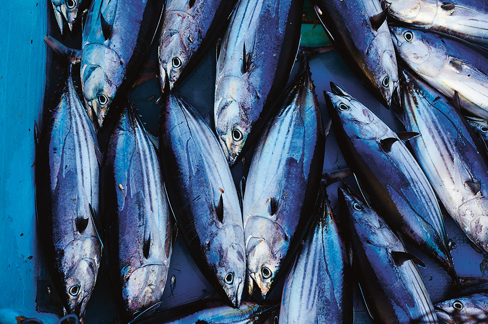 Is eating tuna sustainable?
