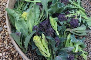 February in Jamie's garden