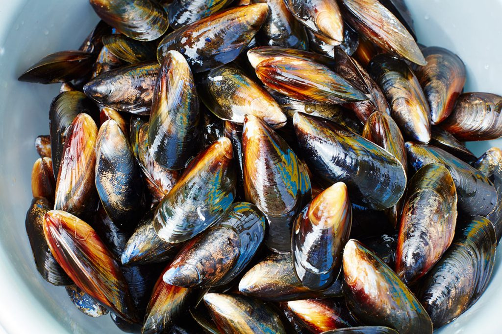 seafood mussels in a bowl