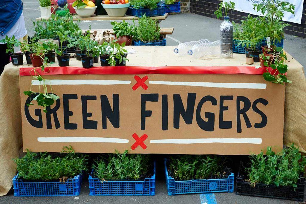 aquaponics farming - green fingers
