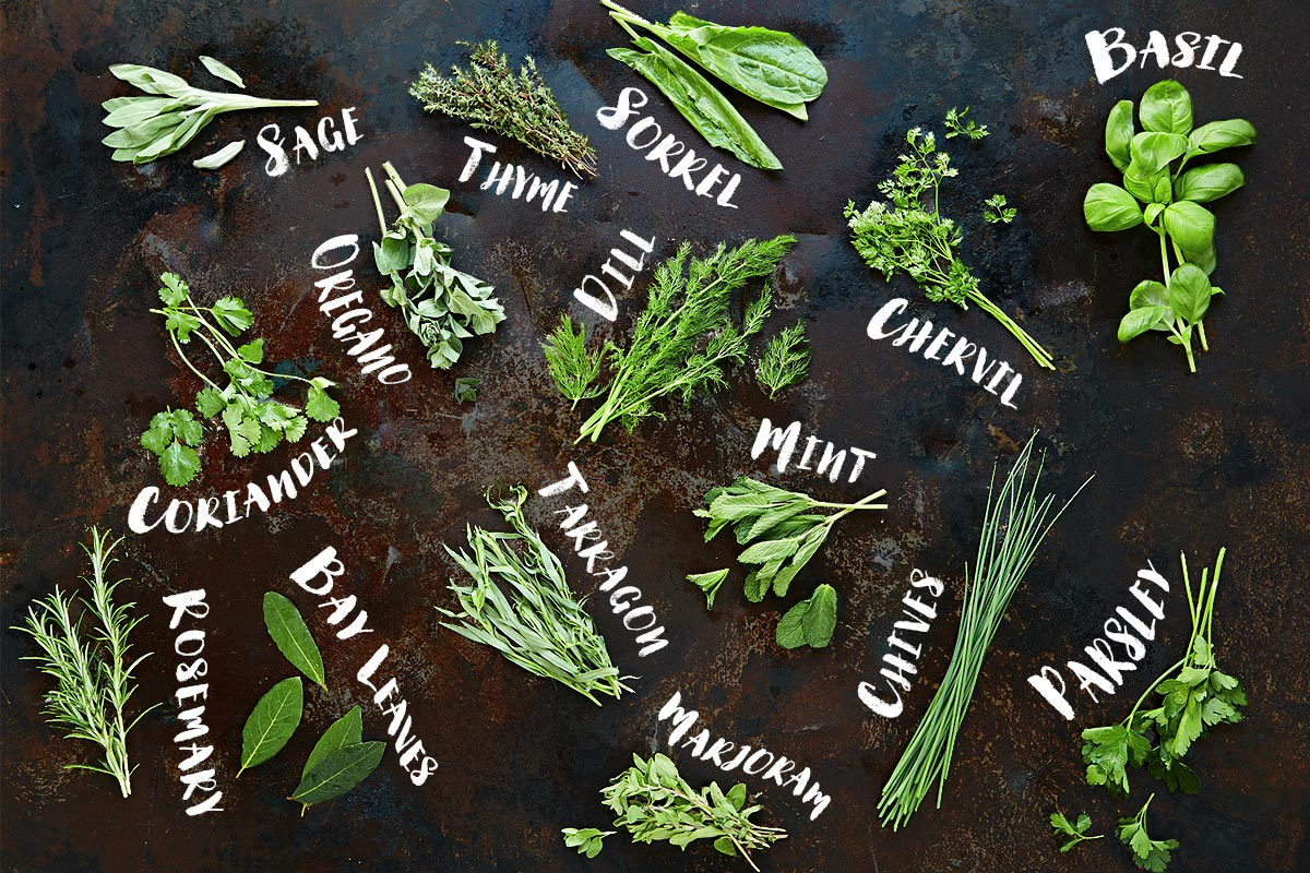 Grow Herbs In Kitchen How To Use Herbs Jamie Oliver Features