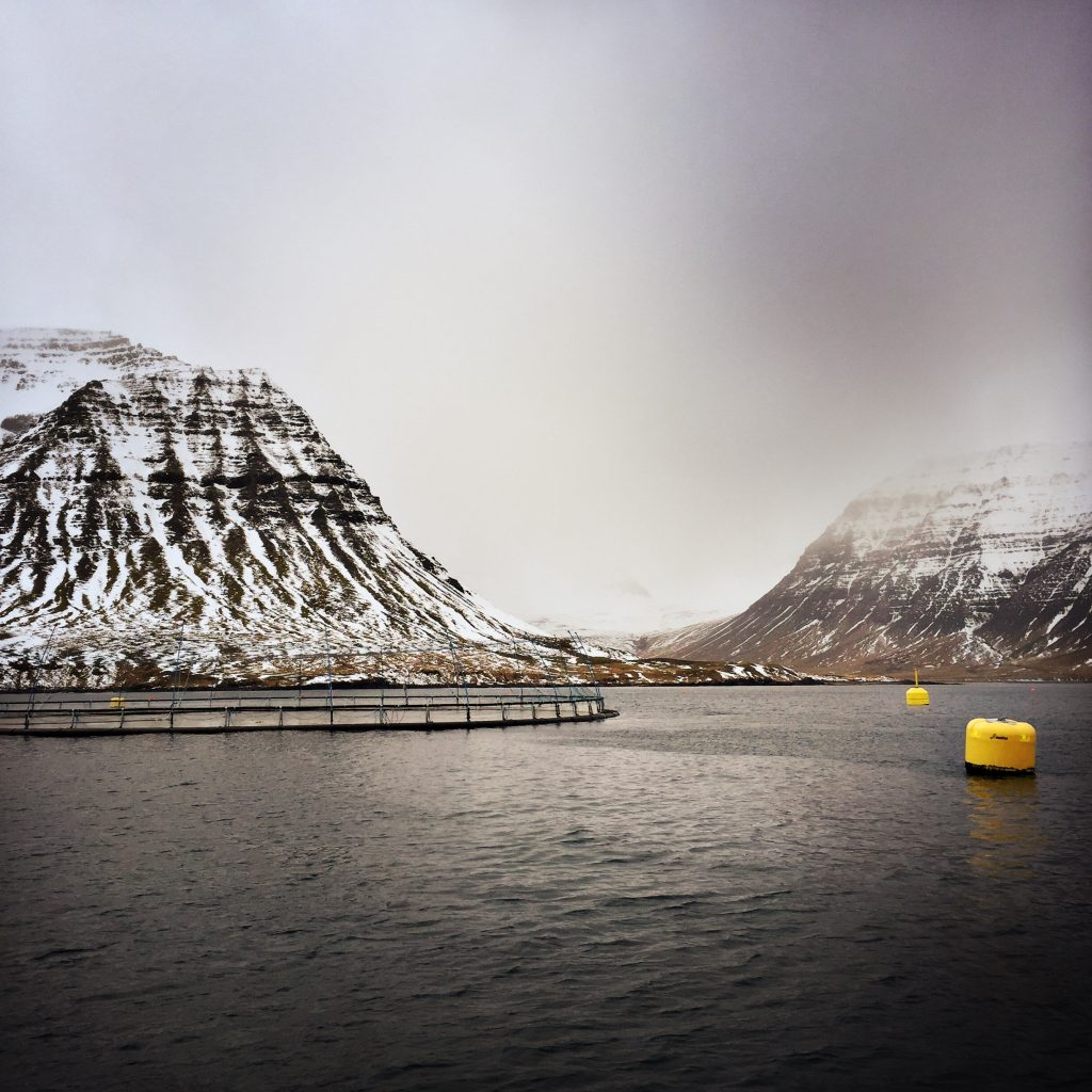 Fish farming the pros and the cons jamie oliver features for Fish farming pros and cons