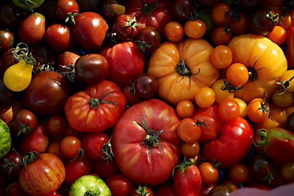 Grow tomatoes - harvest