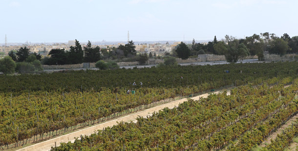 The vineyards of the Meridiana estate.